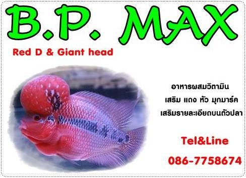 อาหารเร่งแดงปลาหมอสี เร่งหัว เสริมรายละเอียดบนตัวปลา