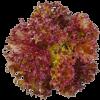 เมล็ดเรดคลอรัล (Red Coral) แบบเคลือบ จำนวน 22 เมล็ด