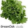 เมล็ดกรีนโอ๊ค Green Oak