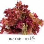 เรดโอ๊ค Red Oak