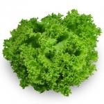 เมล็ดกรีนคลอรัล (Green Coral) แบบเคลือบ จำนวน 22 เมล็ด