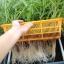 ชุดปลูกผักไฮโดรระบบ DFT ชุดเล็ก (ระบบน้ำนิ่ง) **ฟรีค่าส่ง ปณ.ธรรมดา** thumbnail 2