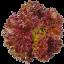 เมล็ดเรดคลอรัล (Red Coral) แบบเคลือบ จำนวน 22 เมล็ด thumbnail 1