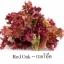 ชุดปลูกผักไฮโดรระบบ DFT ชุดใหญ่ (ระบบน้ำนิ่ง) **ฟรีค่าส่ง ปณ.ธรรมดา** thumbnail 13