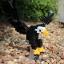 Bald Eagle thumbnail 1