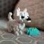 Chihuahua thumbnail 1