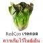 ชุดปลูกผักไฮโดรระบบ DFT ชุดใหญ่ (ระบบน้ำนิ่ง) **ฟรีค่าส่ง ปณ.ธรรมดา** thumbnail 17